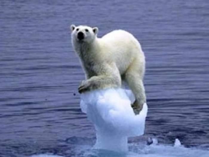 Un urs polar pe gheață