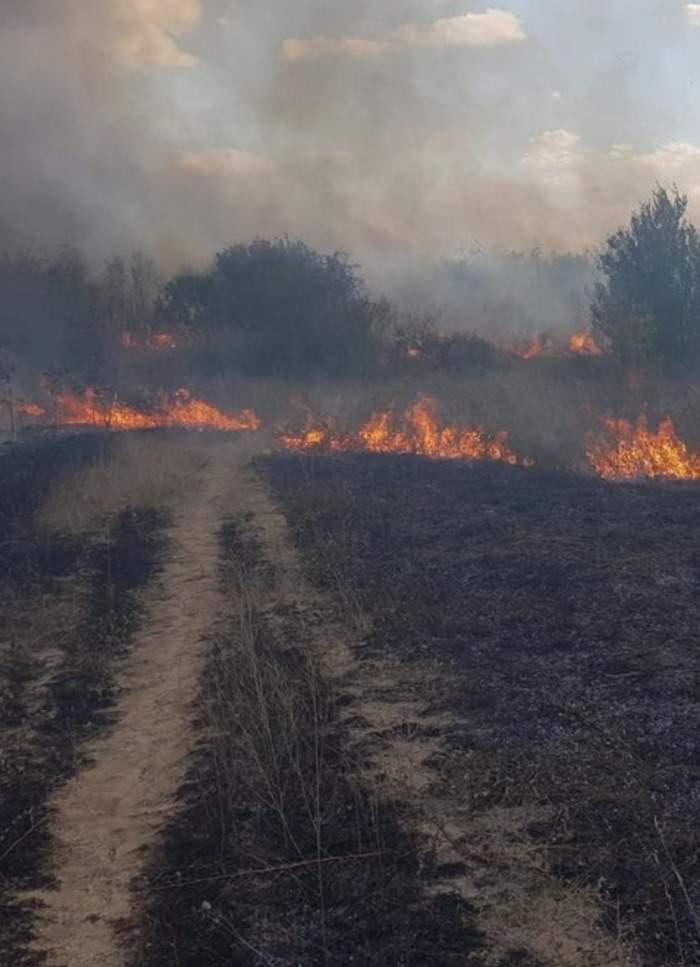"""Incendiu la Hipodromul din parcul """"Nicolae Romanescu"""" din Craiova. Flăcările mistuitoare au cuprins cinci hectare de vegetație / FOTO"""