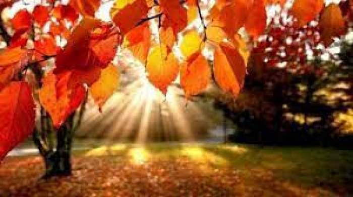 Razele soarelui printre crengile copacilor