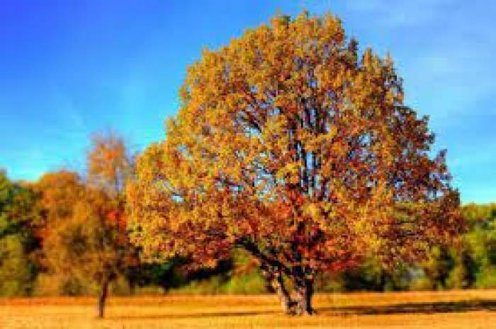 O poiană cu pomi îngălbeniți