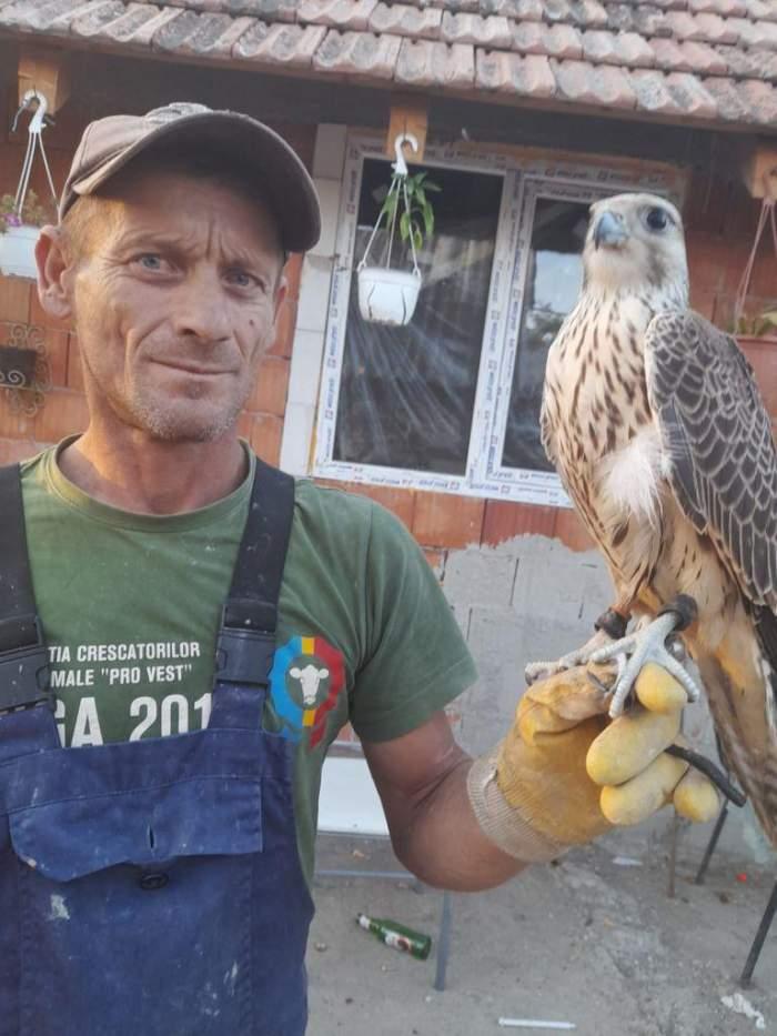 Un bărbat din Arad s-a trezit cu 20 de mii de euro în curte, după ce un uliu valoros a zburat din Slovacia în România / FOTO