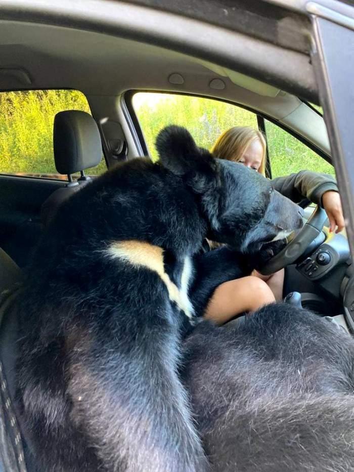 """O tânără din Rusia a fost surprinsă în timp ce conducea, iar un urs o acompania pe locul din dreapta. """"Este un animal curios și..."""" / FOTO"""