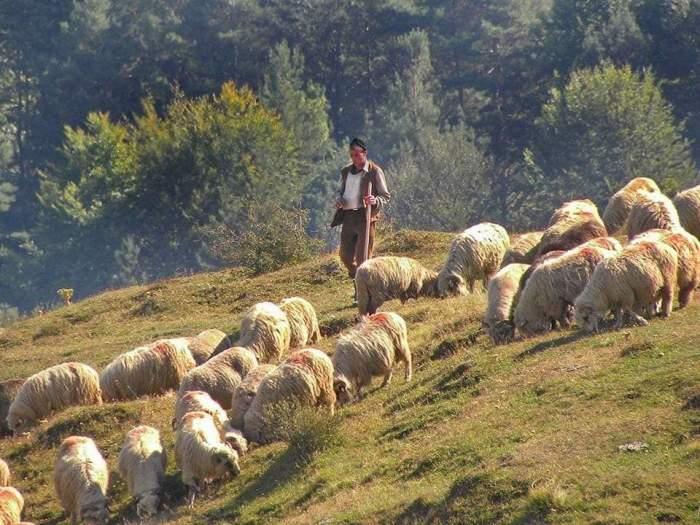 Ce înseamnărăvășitul oilor, obicei vechi românesc din zonele de munte