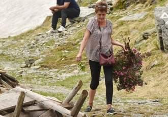 O turistă a furat o specie protejată de bujor de munte! Ce sancțiune usturătoare riscă acum femeia / FOTO